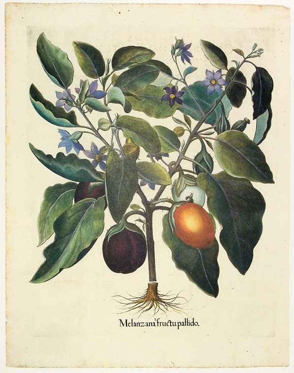 Fine reprints of antique botanical art.